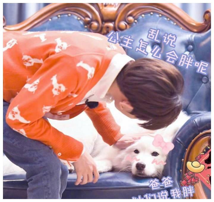 """王源的狗现身某电视节目,被网友""""嘲笑"""",简直胖成猪!"""