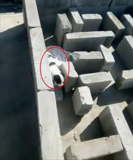 """小伙用石砖摆了一个迷宫,让自家小狗去""""探险"""""""