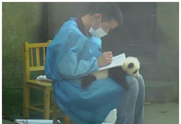 将熊猫当彩票来用,羡煞众多游客:让我来试试呗