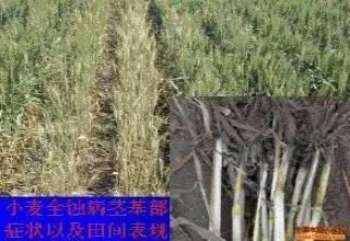 请不要再以农药为噱头,散播谣言伤害农民了!