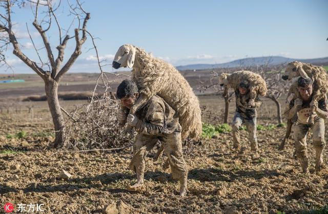 土耳其村庄60余牲畜跌落泥潭 消防员费力背绵羊满身是泥