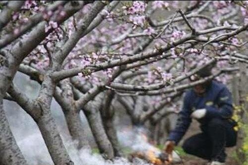 冬季气温骤降,果树该怎样防冻保温?