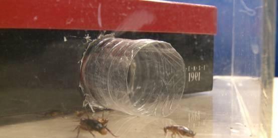 """矿泉水瓶,别再当""""废品"""",放在家里能驱虫,蟑螂半年不进家门"""