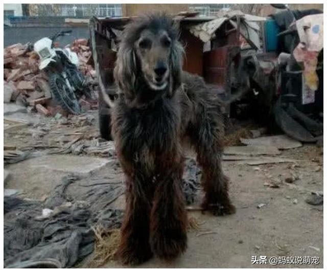 废品站大爷收养了一条狗,听到有人要买狗狗,转身一看下定决心了
