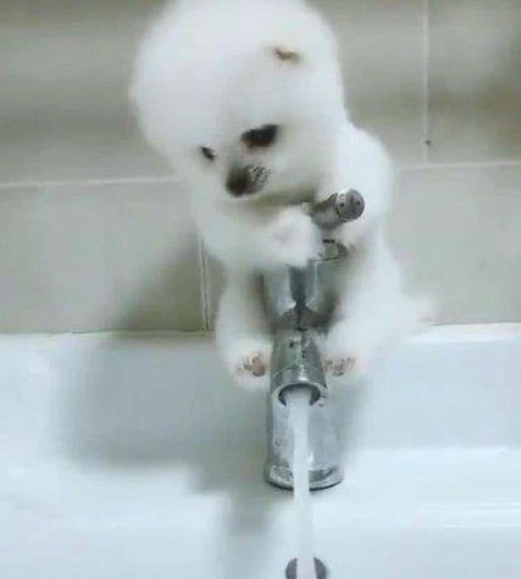 初次给爱犬洗澡,狗狗遇水立马跳起来,死死的抓住水龙头不愿松开