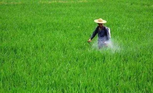 喷洒叶面肥,可以同时混入农药,注意这些禁忌就行