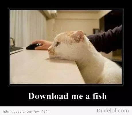 如何从猫口中,拯救你的电线?