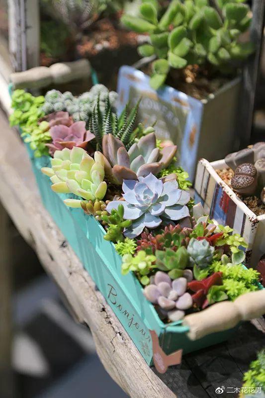 废品、破笼子,他用5天时间,造了一个多肉花园!