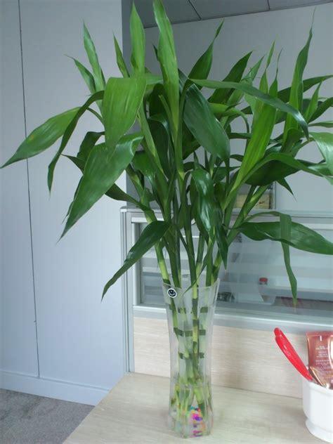 """暖气空调房太干燥,家里""""加湿植物""""不能少,这4种养家里最好了"""