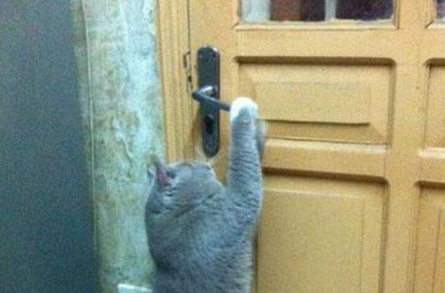 猫咪回老家待了段时间,竟学会了新技能,从此家里门就一直坏!!