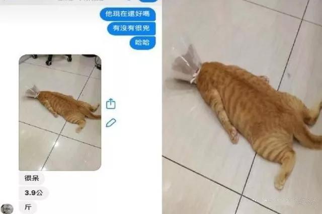 兽医传来橘猫照,一坨地毯趴地上生无可恋:什么都没了