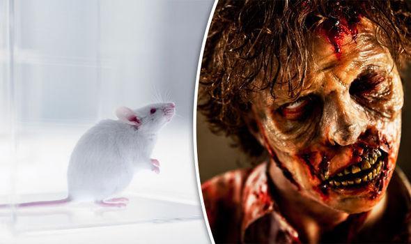 """科学家在小鼠的大脑中找到开关,将小鼠变成了""""僵尸"""