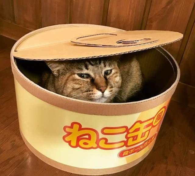 真正的猫罐头,打开就会出现喵星人哦,你不想来一个嘛