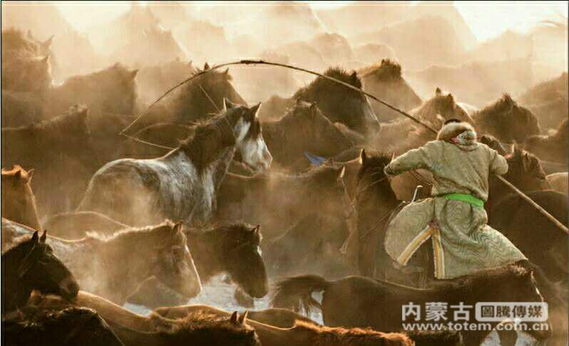 【图说内蒙古】行走在岁月更迭里展望未来的凤凰马场牧业合作社