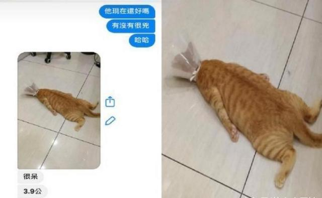 兽医传来橘猫照,一坨地毯趴地上生无可恋:完了,什么都没了