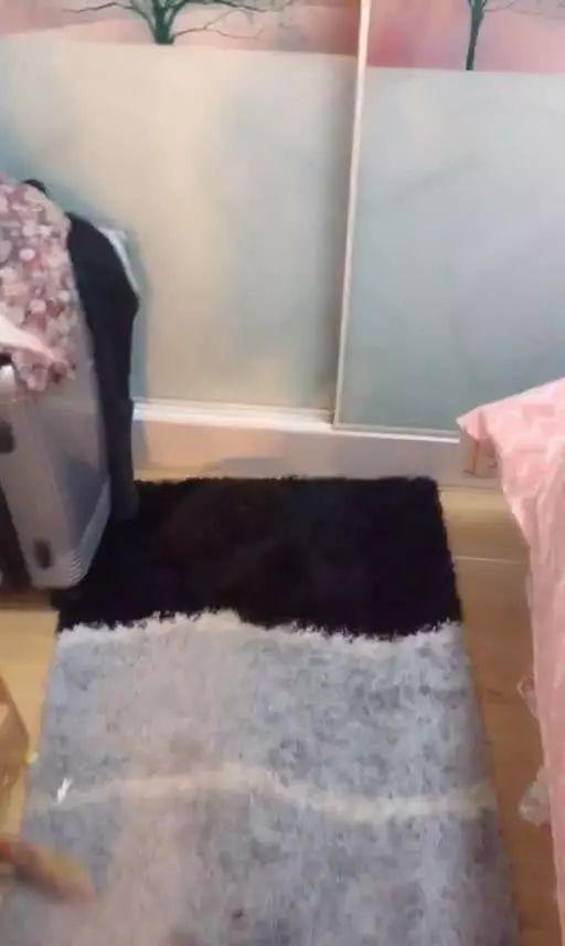 泰迪躺在地毯上休息,主人找了整间屋子都没发现它