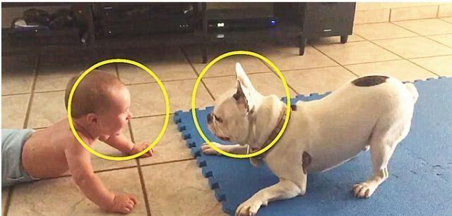 1岁多的宝宝趴地板跟狗狗吵架,下一秒狗狗的动作,真的是太逗了