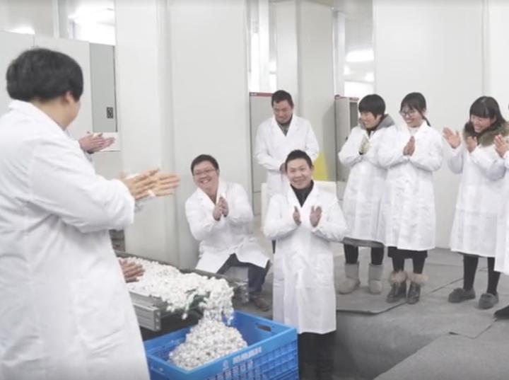 蚕宝宝不吃桑叶吃饲料 养蚕工厂嵊州投产
