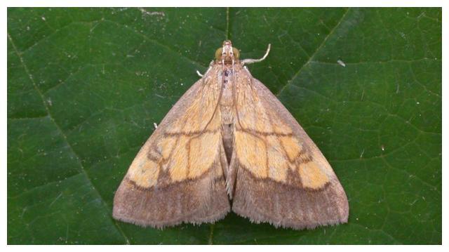 科学家表示,夜间应关闭路灯,让飞蛾进行授粉